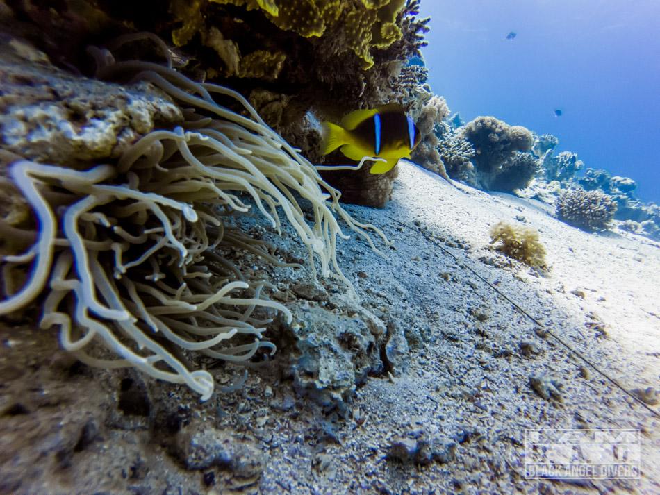 Rafa koralowa Jordania, Aqaba