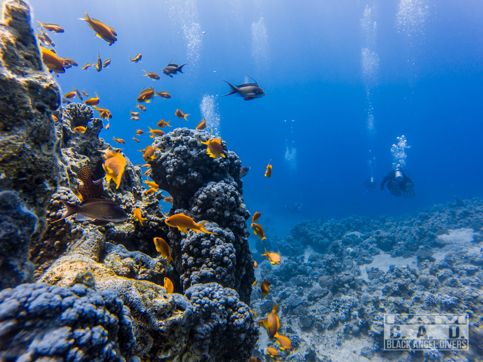 Rafa koralowa Jordania